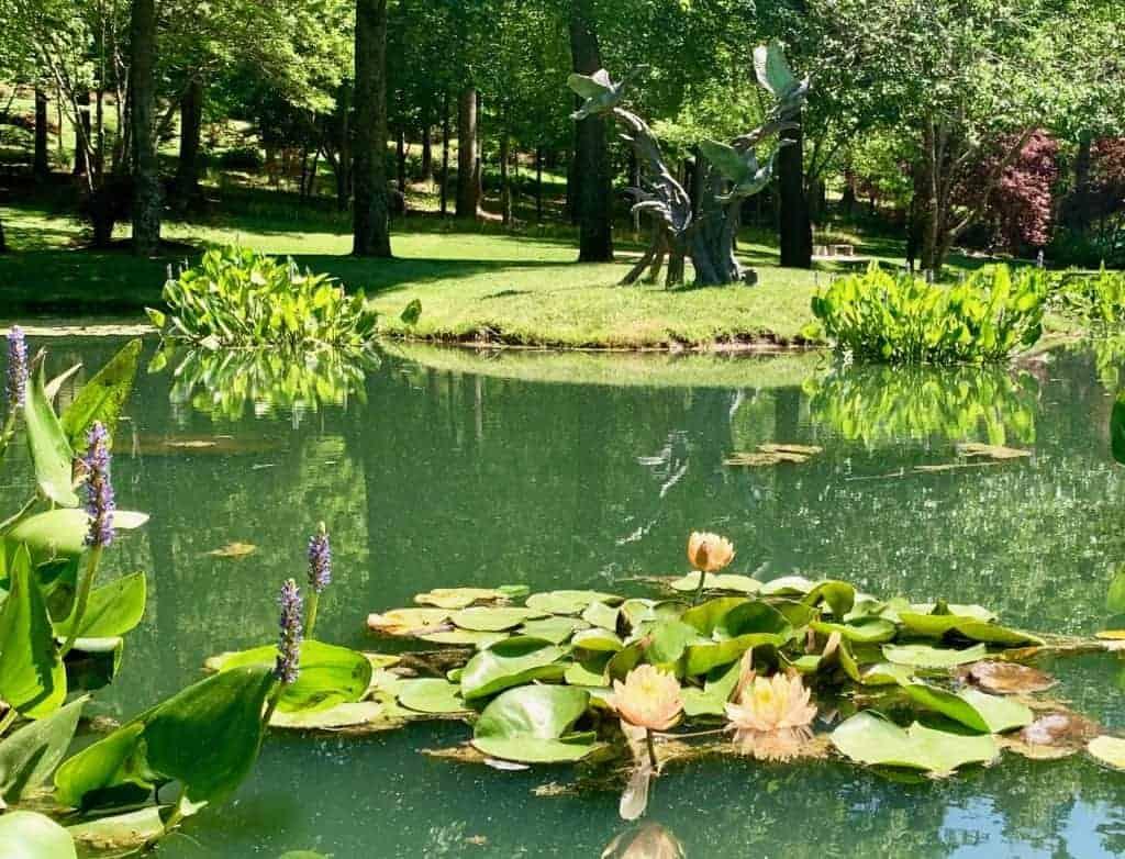 water lily gardens at gibbs gardens near atlanta georgia
